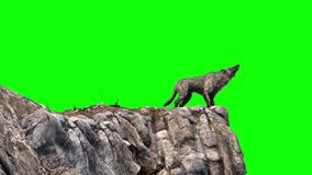 Wolf howl green screen rocks 3D rendering animation