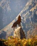 Wolf Howling Brass Figure sur la roche photos libres de droits