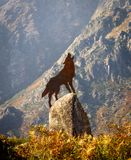 Wolf Howling Brass Figure on Top of Rock royalty free stock photos
