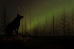 Wolf Howling in a Forest Royalty Free Stock Photos