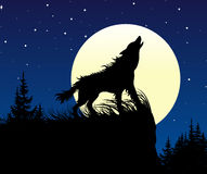 The wolf howling on the full moon at night. Royalty Free Stock Photography