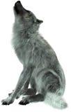 Wolf Howling Illustration Isolated stock image