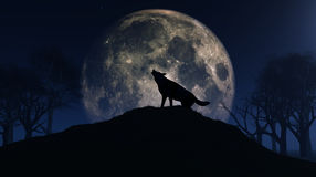 Wolf howling at the moon Royalty Free Stock Images