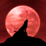 Wolf howling at the moon in the midnight Royalty Free Stock Photography