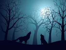 Wolf Howling in the Night Forest Stock Image