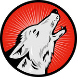 Wolf howling side view Royalty Free Stock Images