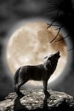 Wolf howling to the moon. A wolf howling to the full moon Royalty Free Stock Photo