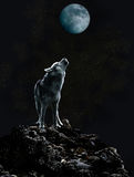 Wolf howls at the moon on a dark night Stock Photography