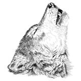 Wolf howls sketch Royalty Free Stock Images