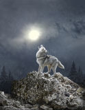 A wolf howls to the moon Royalty Free Stock Photo