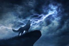 Wolf im Schattenbild zum Gewitter Lizenzfreie Stockfotos