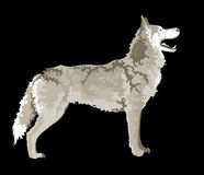 Wolf,  image Royalty Free Stock Photos