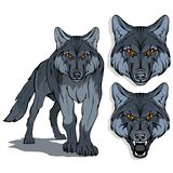 Wolf, isolated on white background, colour illustration, suitable as logo or team mascot, dangerous forest predator, wolf`s head,. Wild animal, gray wolf in vector illustration