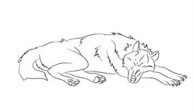 Wolf lies, lines,. White background Stock Photo