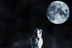 Wolf like borzoi sight hound and full moon Royalty Free Stock Images