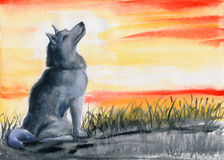 Wolf looking at the sky vector illustration