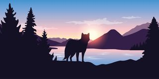 Wolf looks into the distance of the mountain landscape vector illustration