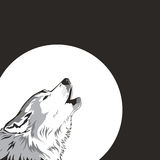 Wolf and moon. Stock Photos