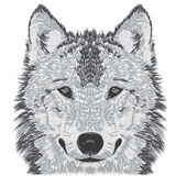 Wolf muzzle sketch Stock Images