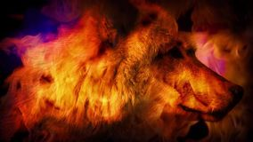 Wolf In Mystic Vision Smoke metrajes