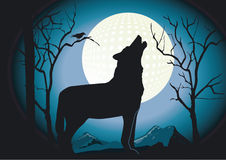 Wolf in the night Stock Images