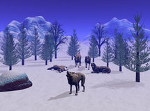 The Wolf Pack. Members of a wolf pack on a cold winter night. 3D models, computer generated Royalty Free Stock Photo