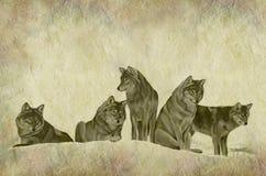 Wolf Pack Parchment rustico illustrazione di stock