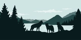 Wolf pack by the river green forest wildlife nature landscape. Vector illustration EPS10 vector illustration