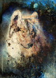 Wolf painting, color abstract effect on background Stock Photos