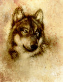Wolf painting, old paper background and sepia effect. Stock Images