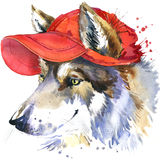Wolf and red cap T-shirt graphics, wolf illustration with splash watercolor textured background. illustration watercolor wolf fash Stock Photography