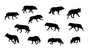 Wolf running silhouettes Royalty Free Stock Images