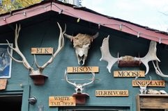 Wolf Sanctuary de dourado, Canadá fotografia de stock royalty free