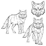 Wolf set. Vector sketch of a wolf. Business sign logotype wolf face. Sketch of a tattoo wolf. Forest predatory beast dangerous wolf royalty free illustration