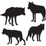 Wolf silhouette black many individuals. Isolated Stock Photo