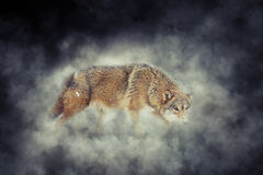 Wolf in smoke Stock Photos