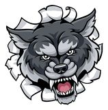 Wolf Sports Mascot Tearing Through Background Royalty Free Stock Image