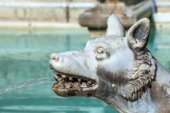 Wolf Spouting Water Fonte Gaia Siena Royalty Free Stock Image