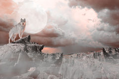 Wolf Standing on a Mountain. Under a full moon Stock Photos