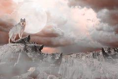 Wolf Standing på ett berg Arkivfoton