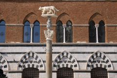 She-wolf statue on Piazza del Duomo in Siena Royalty Free Stock Image