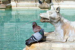 Wolf Statue With Pigeons Royalty Free Stock Images