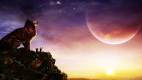 Wolf On The Sunset. Wolf standing on a hill watching a beautiful surreal sunset Stock Image