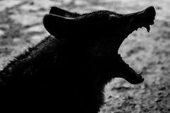 Wolf teeth Stock Photography