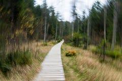 Wolfs valley dizziness. Wolf, valley, dizziness, adršpašsko-teplické skály, swamp, nausea, vertigo Royalty Free Stock Photo