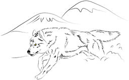 Wolf vector. Wolf running. is a  sketch Stock Photography