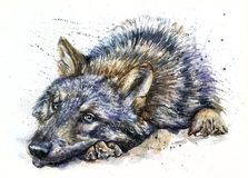 Wolf watercolor painting predator animals Wild and Free