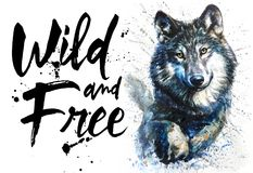 Free Wolf Watercolor Predator Animals Wildlife, Wild And Free, King Of Forest, Print For T-shirt Royalty Free Stock Images - 122524589