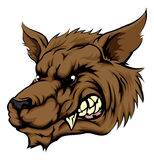 Wolf or werewolf character. A mean looking werewolf wolf man, or wolf sports mascot character face Stock Photos