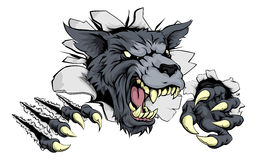 Wolf or Werewolf ripping through. A scary wolf mascot ripping through the background with sharp claws Stock Photos